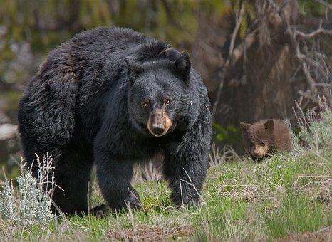 Frontier Bear spray