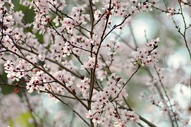 Springtime Activities In The Wilderness