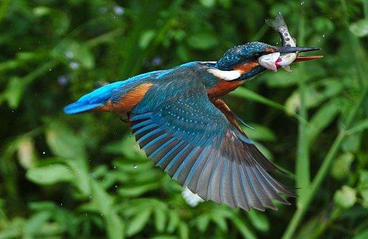 Best Field Guide for Birds